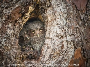 Funny animal photos owls