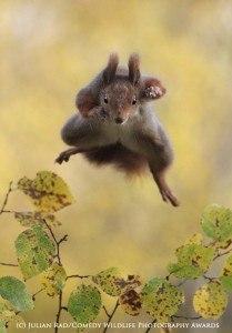 Funny animal photos squirrel