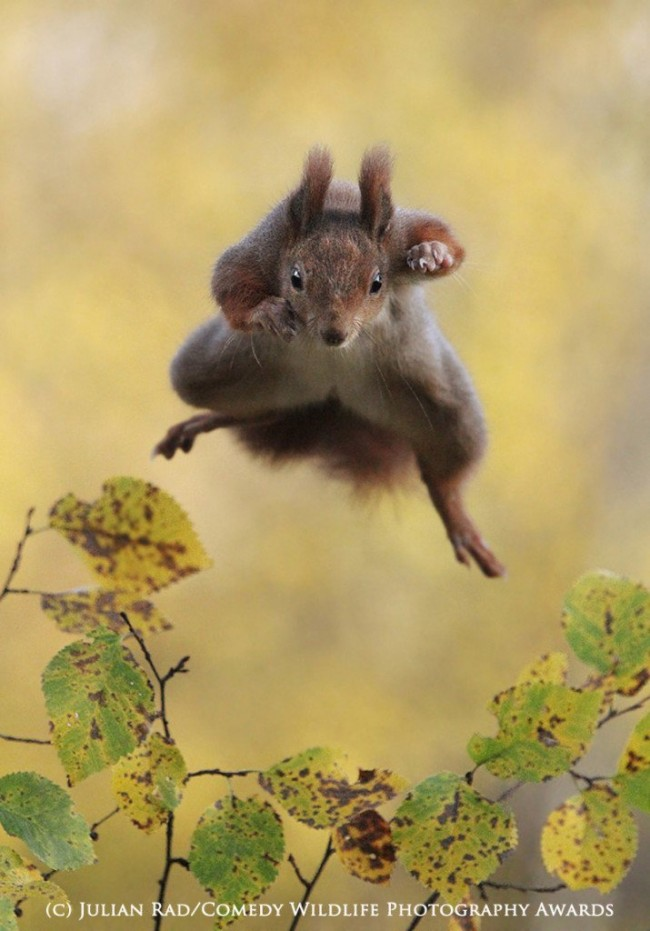 Funny animal photos squirrel