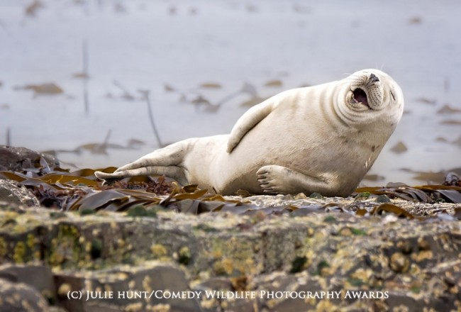 Funny animal photos seal