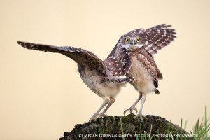 Funny animal photos birds