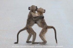 Funny animal photos baboons