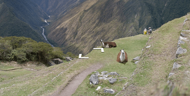 Machu_Picchu_Streetview4
