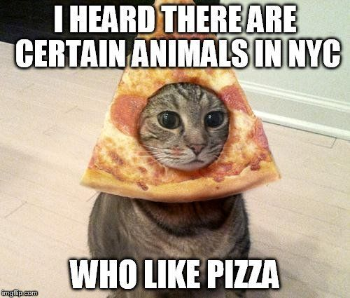 Pizza Rat cat