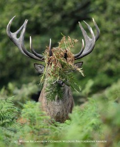 Funny animal photos deer