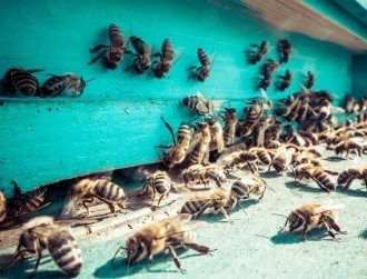 Here's how an Irish start-up plans to use IoT to save the bees (video)