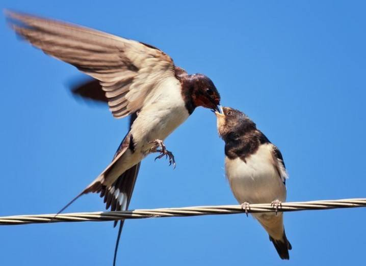 birds-twitter-shutterstock_351094058