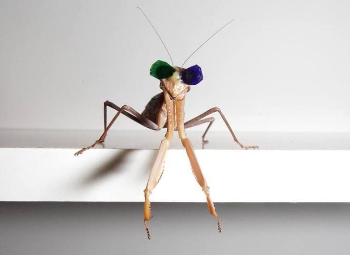 Mantis wearing 3D glasses