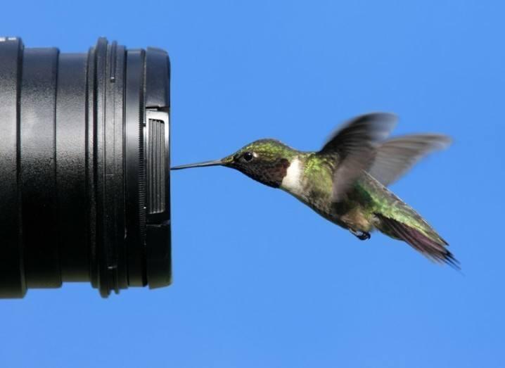 #BirdCelebs: bird in front of camera