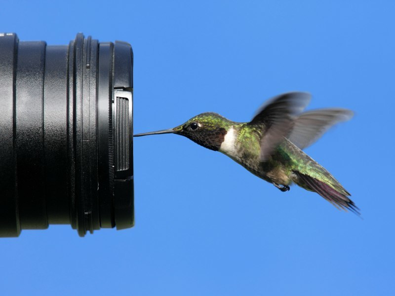 Wet your beaks with Midnight's latest hashtag, #BirdCelebs