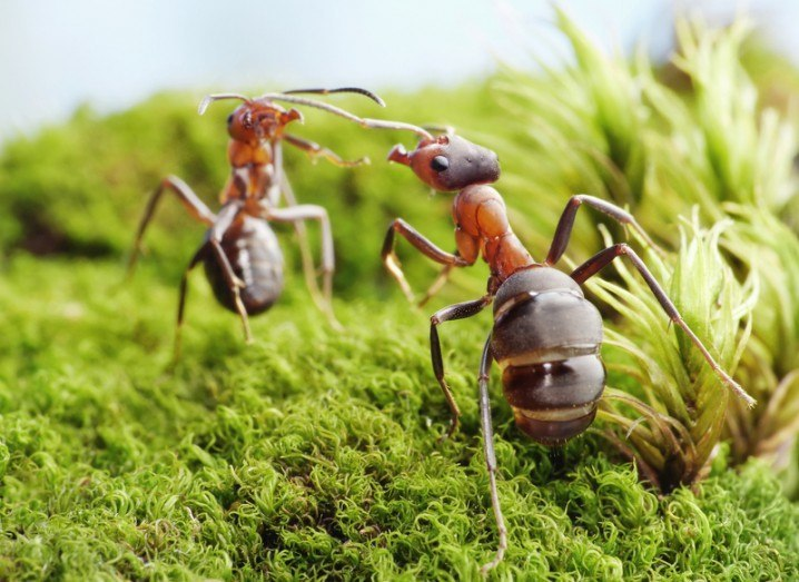 Ant fight Nature