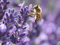 The bees are still in trouble, so we are too