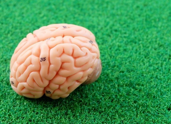 mini-brains