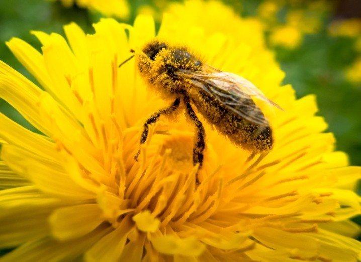 Pollen batteries