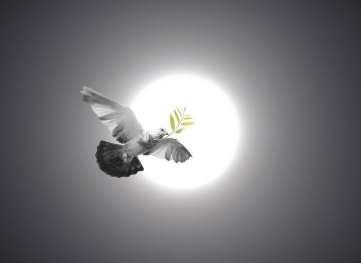 twitter-bird-peace-shutterstock