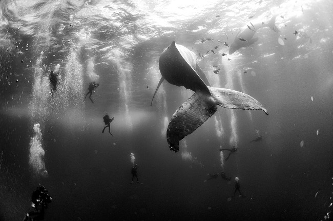 © Anuar Patjane Floriuk - Whale Whisperers