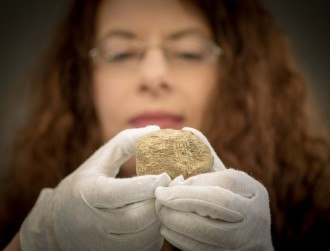 A bear bone from Clare has rewritten Irish human history by 2,500 years