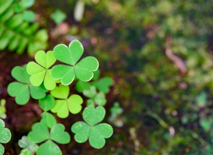 St Patrick's Day Paddys Pattys