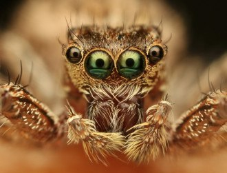 'The closest thing to a spider that isn't a spider' discovered