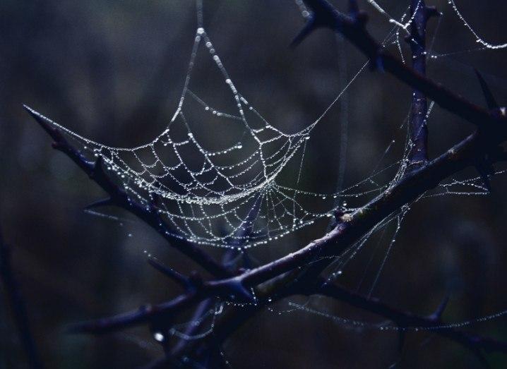 dark_web_shutterstock