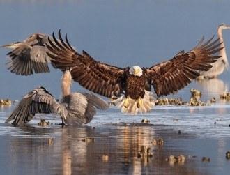 9 wonderful images from the Audubon Photography Awards