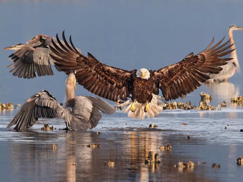 9 wonderful images from the Audubon Photography Awards