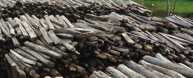 Logging Earth Day