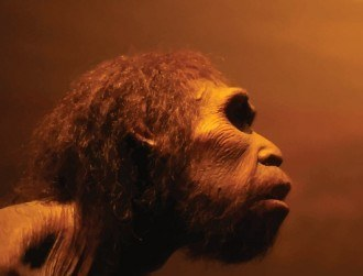 Spread of STDs helped kill off European Neanderthals