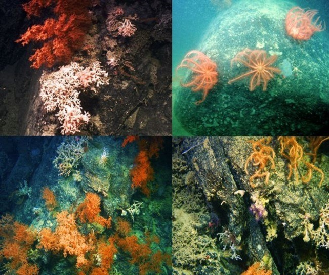 The incredible coral reef discovered in Porcupine Bank Canyon. Image via QuERCi/Graham Ryan
