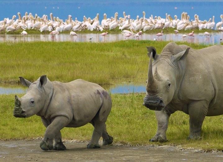 Rhino poaching Earth Day