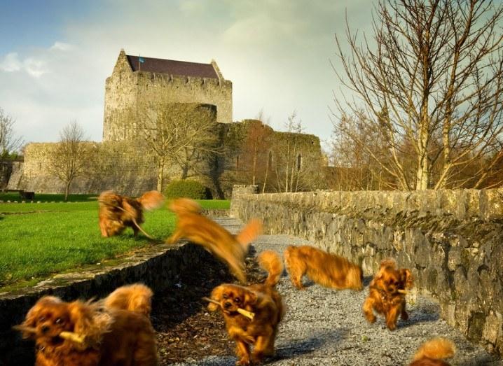 athenry_castle_shutterstock