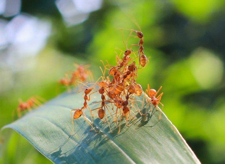 Ants robot bugs