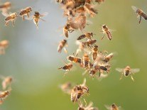 RoboBees were running out of juice, until now