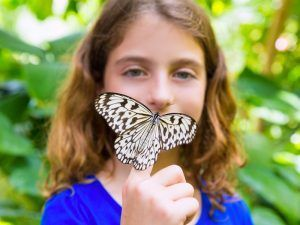 butterfly_science_discovery_shutterstock