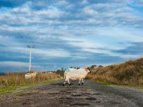Telcos urged to speed up broadband and 4G rollout to rural Ireland