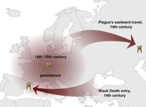The paper suggests a connection between the Black Death and the modern-day plague pandemic as well as the persistence of plague in Europe between the 14th and 18th centuries, via Spyrou et al./Cell Host & Microbe 2016