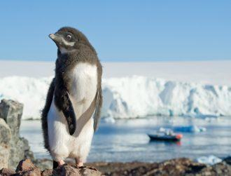 Penguin populations to plummet due to climate change – report