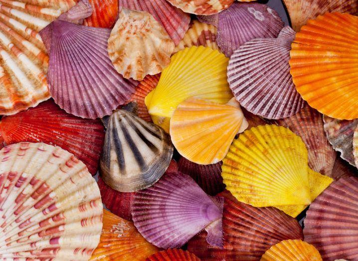 Cancer: seashells