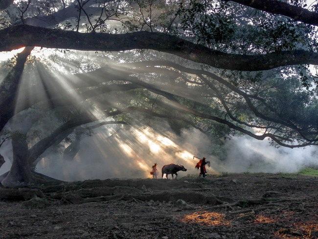 "Fugen Xiao won the Travel category – ""This picture shows harmonious scenery of an old couple who started working early in the morning when the sun shined a light in Xiapu, Fujian Province. I focused on the moment and story in front of me."""