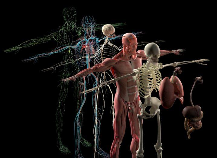 3D4Medical anatomy
