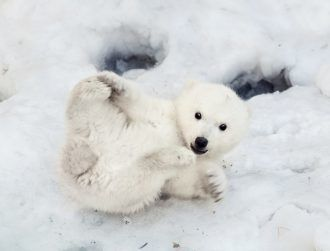 Watch: Take a VR tour of the Arctic with an inquisitive polar bear cub