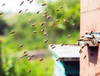 Here's how you can save threatened bees in 6 simple steps