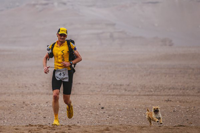 Bringing Gobi home is not just any shaggy dog story – it is an epic