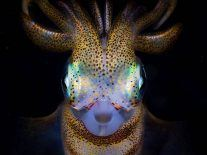 Check out 43 incredible nature images from Australian awards