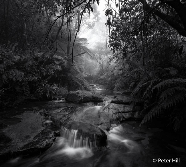 Runner-up: 'A wet soggy morning' – Leura Falls Creek, by Peter Hill