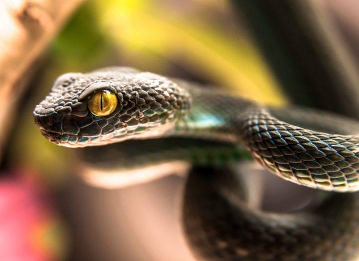 Snake spinal injury