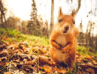 The hunt is on for squirrel never seen alive before