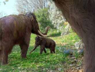 Freshwater woes were the final nail in coffin for woolly mammoths