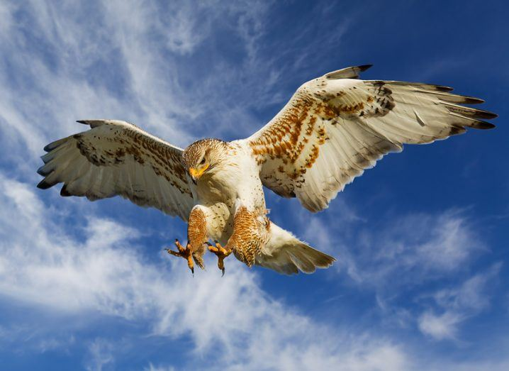 http://www.shutterstock.com/pic-32577787/stock-photo-large-ferruginous-hawk-in-attack-mode-with-blue-sky.html