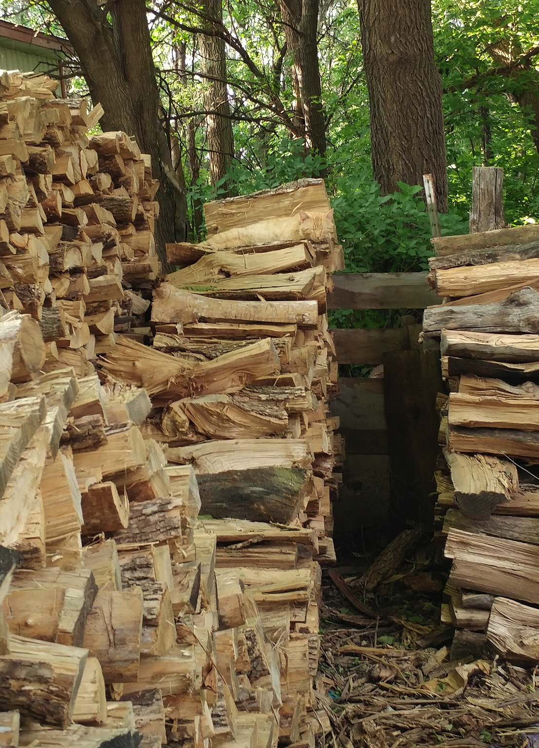 Cat woodpile photo
